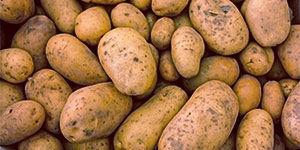 Картофельный крахмал от производителя